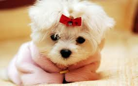 images cute puppy with bow