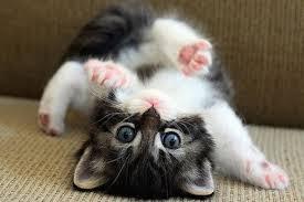 images kitten